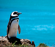 Puerto Madryn Tour, Argentina Travel, Argentina For Less