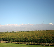 South America Wine Tour, Argentina Travel, Argentina For Less