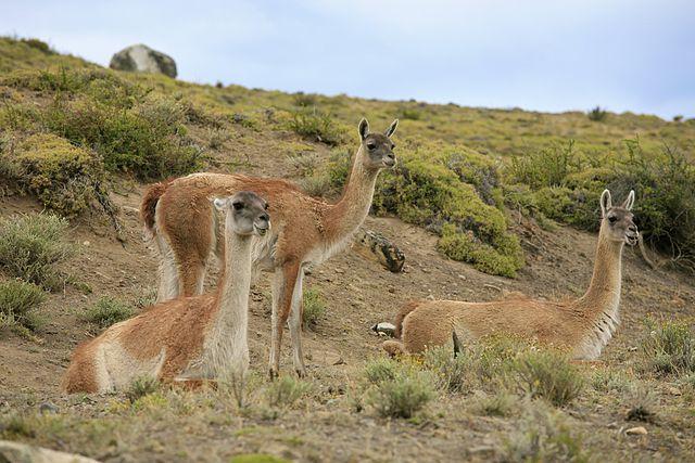 Wildlife in Torres del Paine National Park.