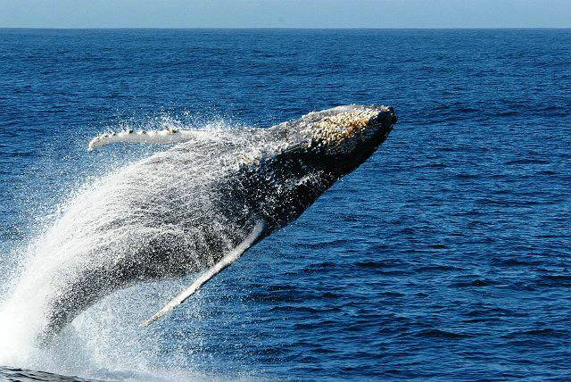 whale watching, Puerto Madryn, Argentina For Less