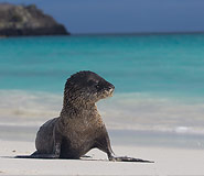 Galapagos picture, Galapagos Travel, Galapagos For Less