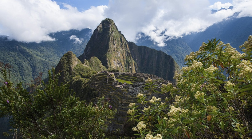 Wild flowers overlooking Machu Picchu, considered one of the New 7 Wonders of the World.