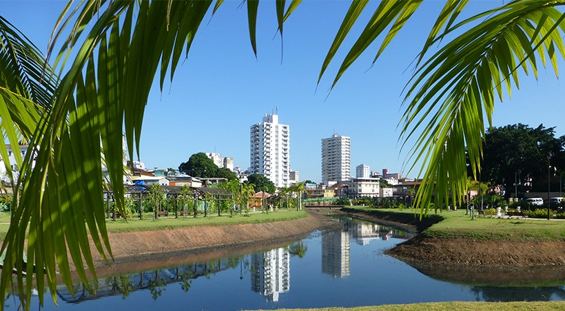 Tropical tree branches framing some modern buildings of the city of Manaus in the Brazilian Amazon.