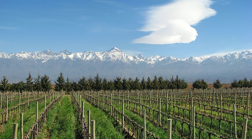 A vineyard overlooked by the snow-capped Andes Mountains in the wine-producing region of Mendoza.