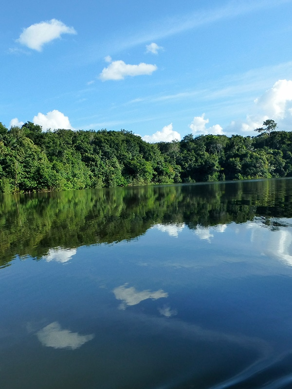 A river surrounded by dense forest in the Brazilian Amazon Rainforest near Manaus.