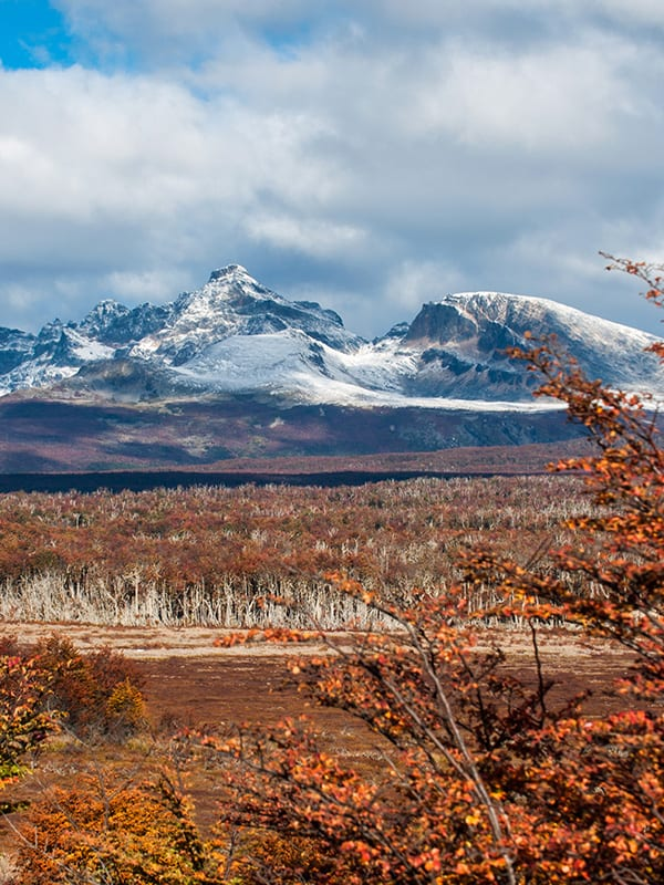 Beautiful red foliage overlooked by snow-capped mountains in Tierra del Fuego National Park.