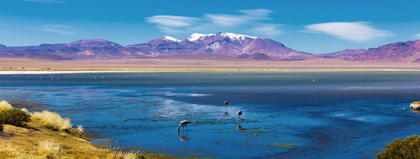 Flamingos standing in a shallow lake with pink mountains in the distance in the Atacama Desert.