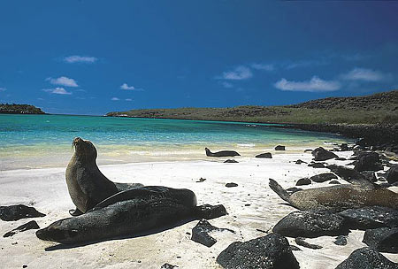 Pristine beaches on the Galapagos Islands which have been recognised by UNESCO